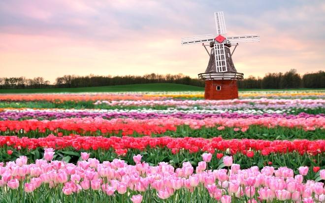 tulip-fields.jpg